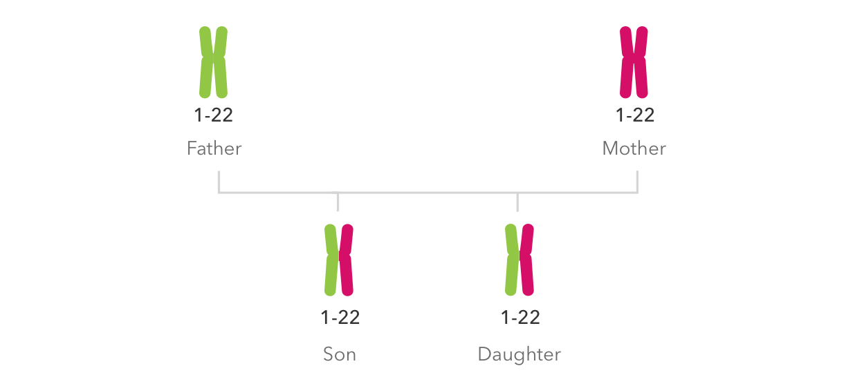 The autosomes - along with the X sex chromosome - are what we use to  determine your matches in the DNA Relatives feature and most of your  reports ...