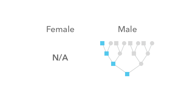 How the Y chromosome is not inherited by females but is inherited in male lineages