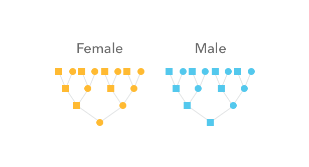 How autosomal DNA is inherited in male and female lineages