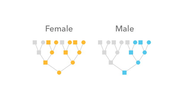 How the X chromosome is inherited in male and female lineages