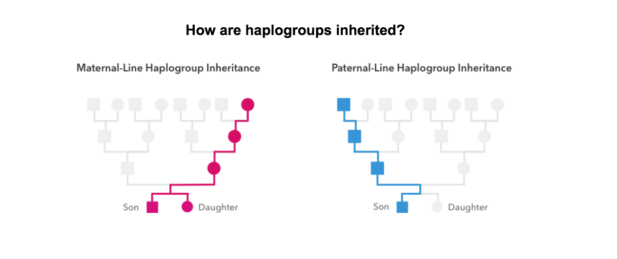 Getting Started with the Haplogroup Reports – 23andMe